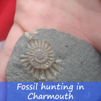fossil hunting in Charmouth